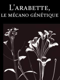 Secrets de plantes : l'arabette, le mécano génétique | Laborie, Emmanuel (Réalisateur)