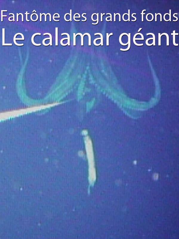 Fantôme des grands fonds - Le calamar géant | Koyama, Yasuhiro (Réalisateur)