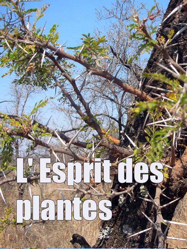 L' Esprit des plantes | Mitsch, Jacques (Réalisateur)