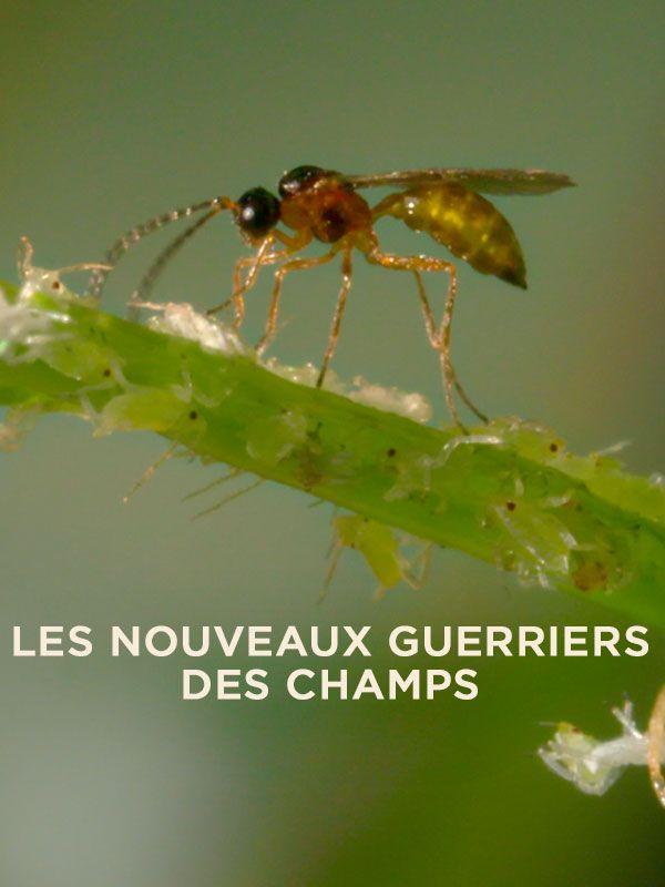 Movie poster of Les nouveaux guerriers des champs