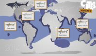 Image de Le Dessous des cartes - Le commerce des espèces menacées