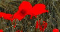 Image de Fleurs de sang