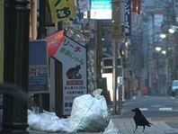 Image de Les Corbeaux de Tokyo