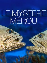 Movie poster of Le mystère Mérou