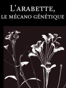 Secrets de plantes : l'arabette, le mécano génétique