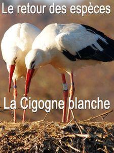 Le Retour des espèces - La cigogne blanche