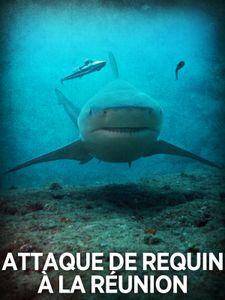 Attaque de requins à la réunion: l'enquête