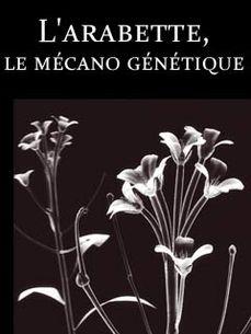 Image de Secrets de plantes : l'arabette, le mécano génétique