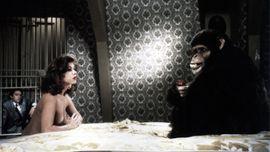 Image de Chronique d'un éleveur de singe