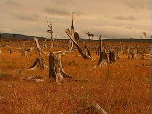 Movie pictures Apocalypse et fin du monde